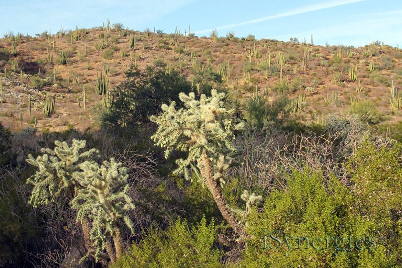 natural sonoran desert beauty