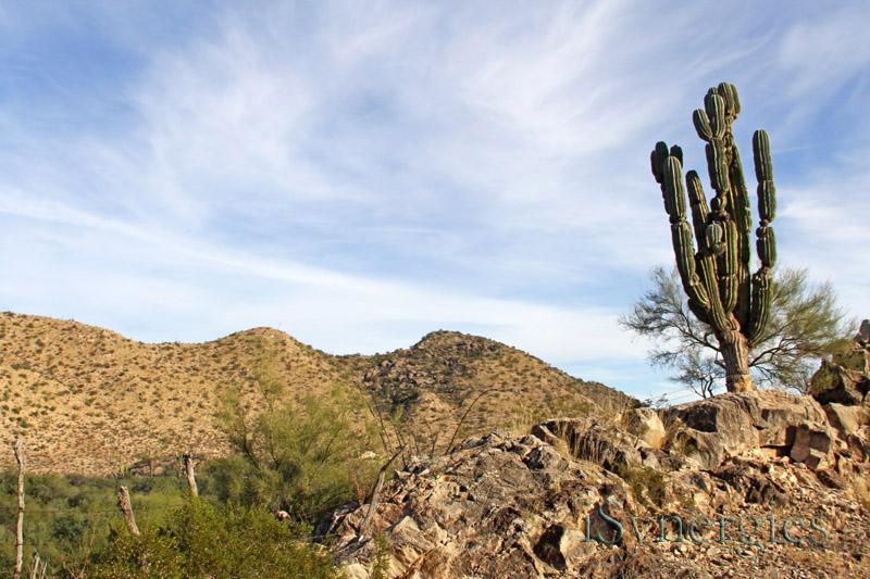 rancho puerto blanco cactus