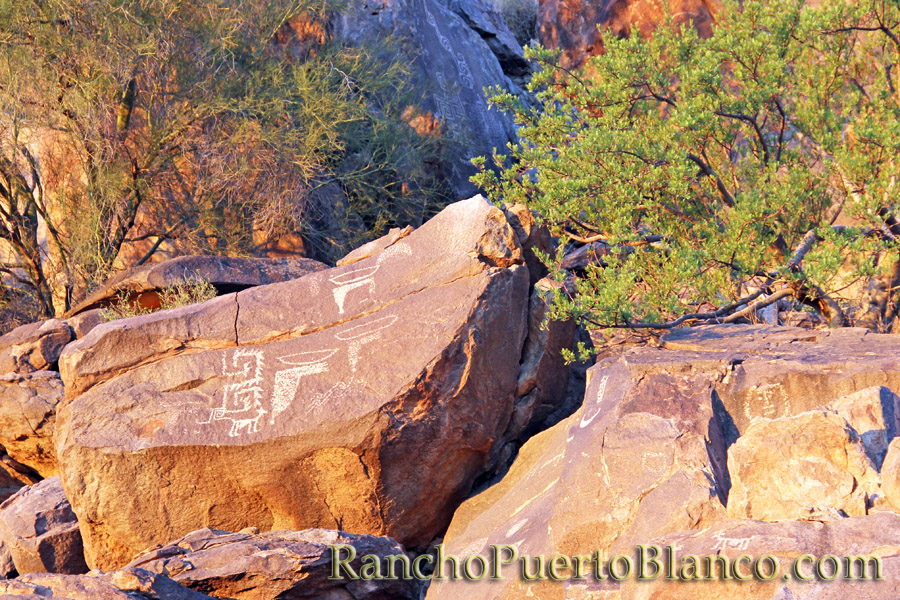 The petroglyphs of La Proveedora - Caborca, Sonora, Mexico